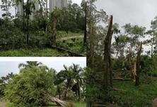 如何正确救治倒伏的树木?倒伏的树木扶正,需要保留三级分枝,最实用救治方案
