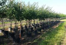 专业苗圃的经营者们因具备主观优势和客观优势,未来10年,专业苗圃将进入黄金发展期!