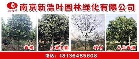 南京新浩叶绿化苗木种植基地