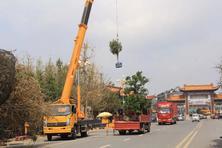 苗木产品的特殊性,苗木的运输费很高,但究竟有多贵?该怎么省?