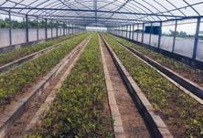 环境绿化、苗木生产是一个持续发展的行业,苗木供需矛盾突出?如何解决?