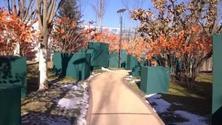冬季树木冻伤受害,各地需提高警惕,切实做好防寒措施,植物防寒风障的搭设,超实用