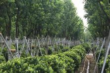 疫情当前,园林企业经营策略探讨---行业并未因此而千疮百孔,反而柳暗花明