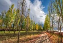 霜降过后,秋冬造林十问!为什么要选在秋冬季进行植树造林工作?又有哪些注意事项?