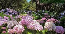 合理的设计搭配总可以给人不断地惊喜,3大要点学会植物色彩配置基本法