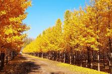 今年炎热干旱的夏季天气将在未来成为普遍现象,中国耐热抗旱树种,在德国或有好前景?