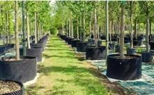 苗木市场已经日趋成熟,你的苗圃正面临着哪些竞争和威胁?