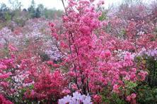 地被植物因处于最底层往往并不惹人注意,虽作绿叶,亦是红花