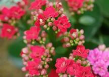 20种常见植物不开花,从这几个地方找原因对症下药!