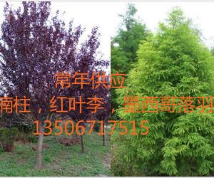 杭州萧山新街绿恒园艺场