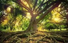 根部是苗木生长好坏的关键位置,也是苗木易发病害的地方,苗木常见根部病害汇总