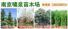 南京啸泉苗木场图片