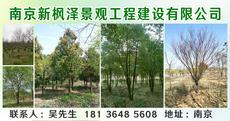 南京新枫泽景观工程建设有限公司图片