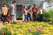 千头菊打榜秋菊销售冠军,此外,荷兰菊、金冠菊、大丽菊也因为花色花型多样受到消费者青睐