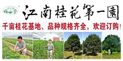 江苏天目湖桂花园艺有限公司