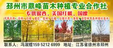 邳州市鼎峰苗木种植专业合作社图片