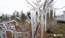 苗木养护:露天的苗木会不会冻伤呢?苗木出现冻害如何是好?