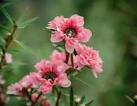 冬天,庭院开花植物以保障花园冬季的美感,还有哪些花儿还在绽放?你还缺哪些?