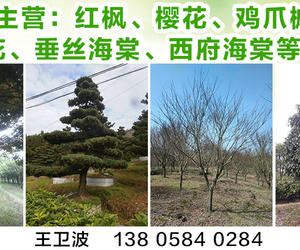 浙江余姚四明種苗花木場