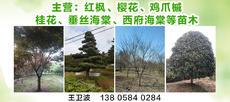 浙江余姚四明種苗花木場圖片