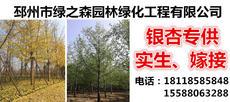 邳州市绿之森园林绿化工程有限公司图片