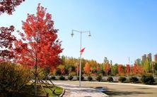 欧洲小叶椴、美国红枫防寒措施,保障苗木能够安全越冬,帮助苗木恢复根系,度过缓苗期