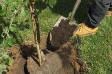 夏季氣溫高、水分蒸發快,樹木移植困難較大,因此必須做到這16點!