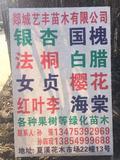 郯城艺丰苗木有限公司