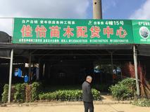 佳怡苗木配货中心