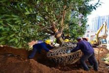 曾甘之如饴的PPP项目如今成了烫手山芋,园林工程企业如何渡难关?