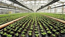 2017农业改革背后到底有哪些致富机会