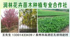 高港区润林花卉苗木种植专业合作社图片