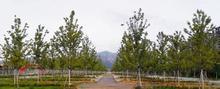 反季节栽树各个环节都不能忽视,反季节栽树如何做到100%成活率