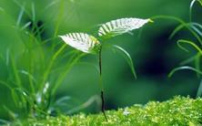 植物时令巧搭配,绿地四季有美景,植物的开花时间每个时令都有不同花色的植物盛开