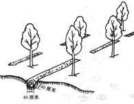 一年之中,秋季是施肥的最好季节,图解4种树木施肥法,一看就会!