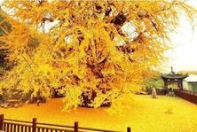 苗木栽植深度不对,栽植过深栽植过浅对树木都有危害,该如何补救?