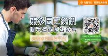 """更多园艺资讯,请关注夏溪花木市场的""""美丽家园园艺平台"""""""