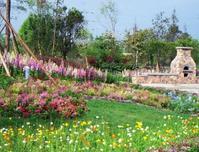 绿色植物不仅具有良好的环境效益,还有生态美观价值,不要小瞧这些绿色植物