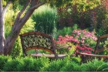 五月花灌木的修剪要點,補植缺株、修剪、去蘗、澆水、施肥及病蟲害的防治