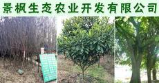 景枫生态农业开发有限公司图片